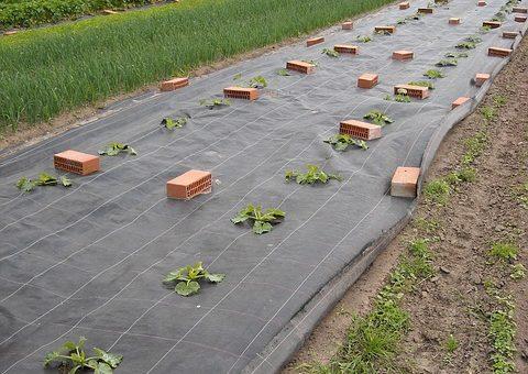 Agrotkanina w ogrodzie