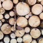 profesjonalna wycinka drzew