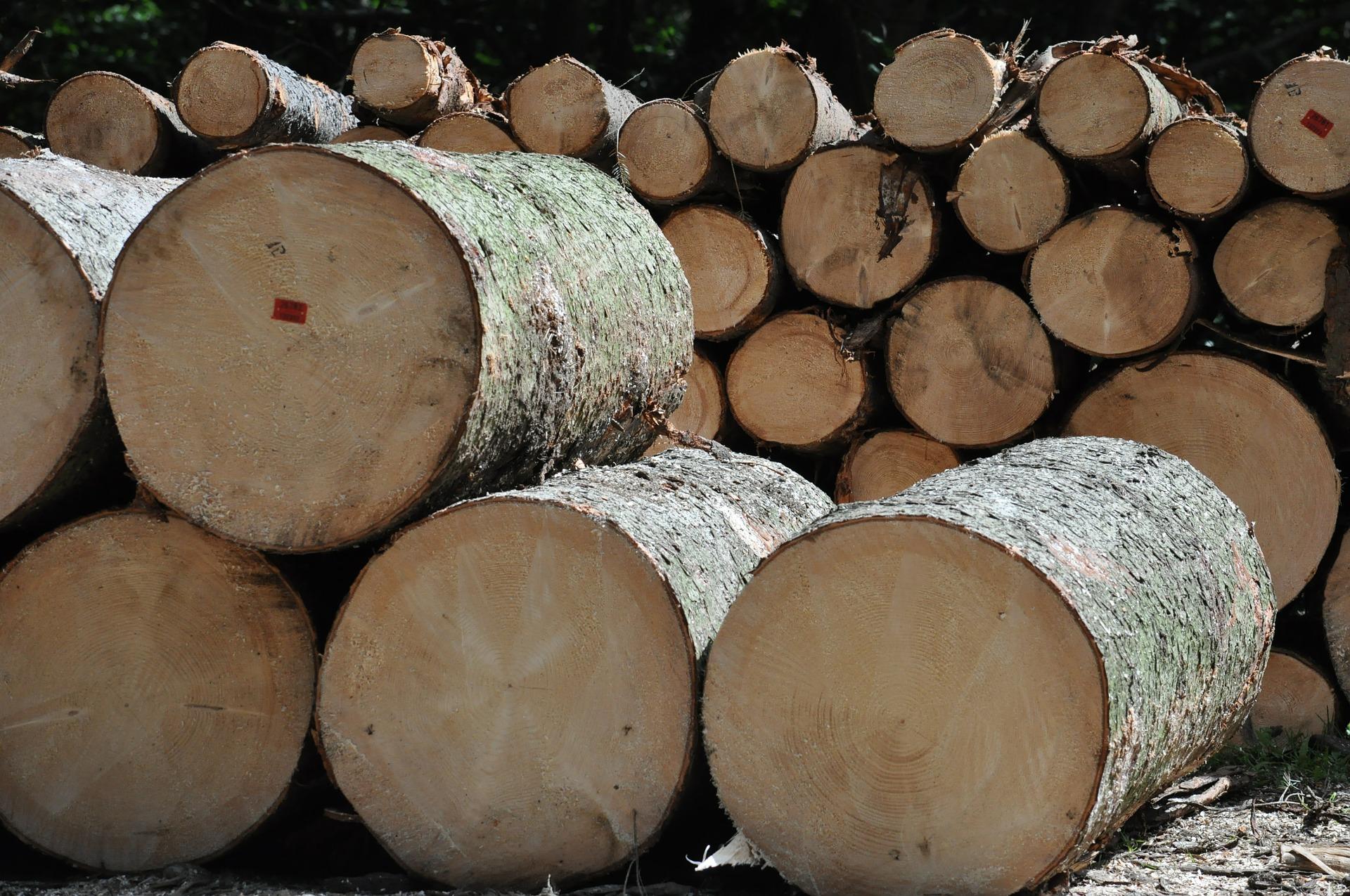 wycinka drzew – bydgoszcz